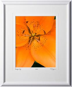 F070707B Orange Lily - shown as 11x14