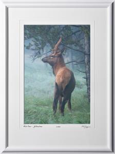 13092001 Mule Deer in Early Morning Fog - Yellowstone - shown as 12x18