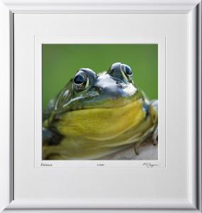 Frog - Michigan - shown as 12x12