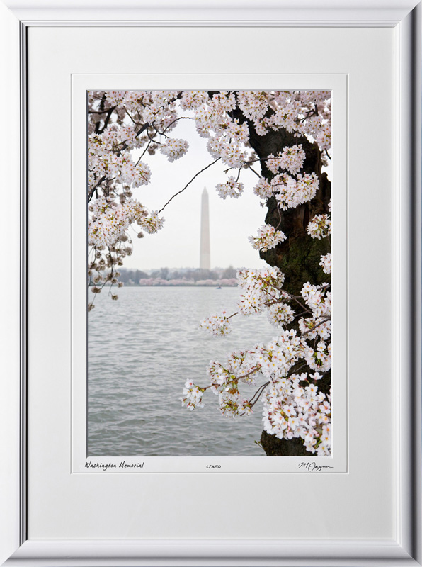 S090402D Washington Memorial - Washington DC Cherry Blossom Festival - shown as 12x18