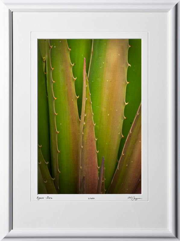 S110516 049 Agave - Peru - shown as 12x18