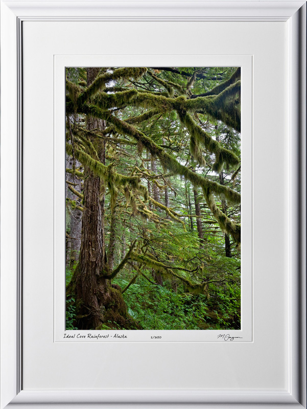 S090721B Ideal Cove Rain forest - Alaska - shown as 12x18