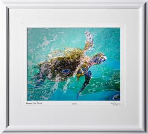 W080403A Hawaii Sea Turtle - Maui Hawaii - shown as 11x14