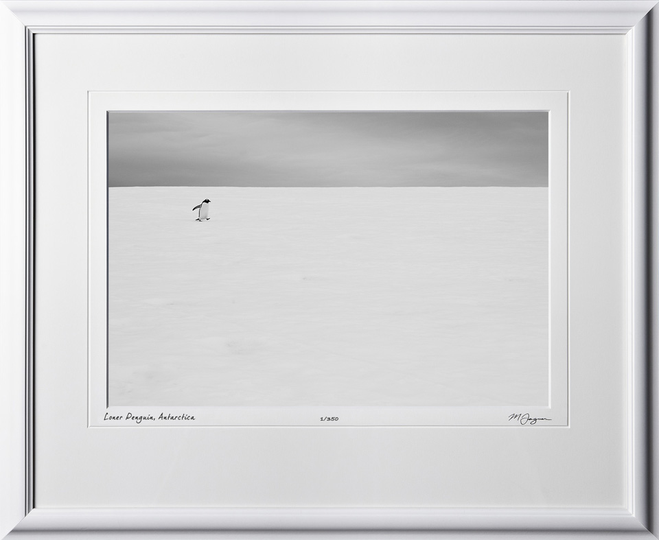 S130112B Loner Penguin - Antarctica - shown as 12x18