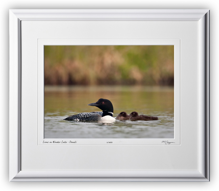 W090714A Loons on Wonder Lake - Denali Alaska - shown as 10x14