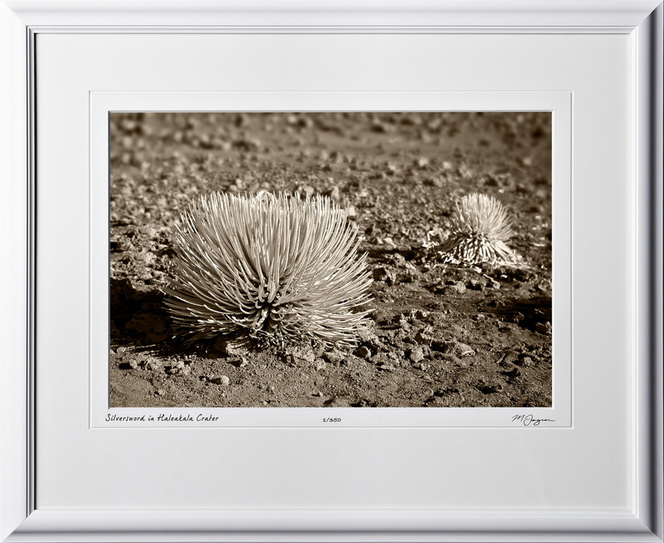 S080407D Silver sword in Haleakala Crater - Maui Hawaii - shown as 12x18