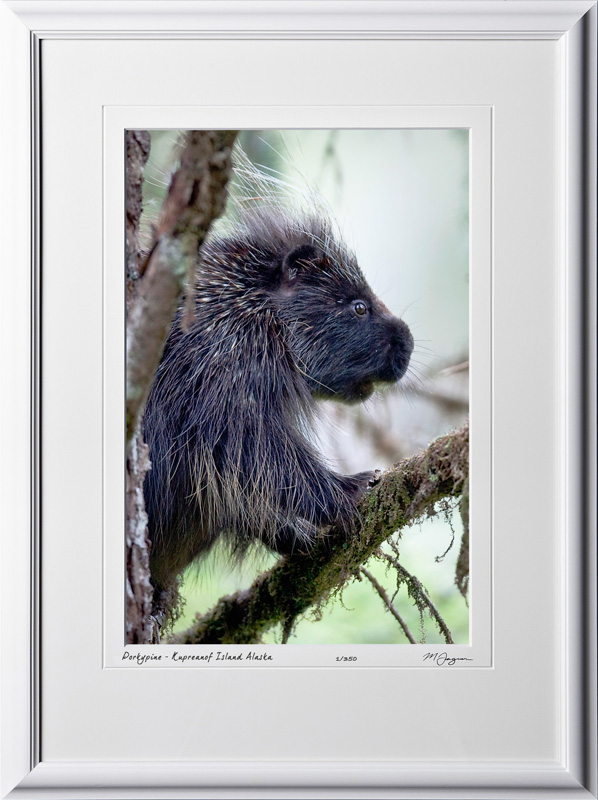 W090721B Porcupine - Kupreanof Island Alaska - shown as 12x18