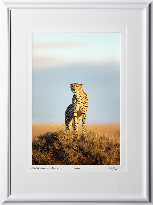W190826B - Cheetah Sunrise - shown as 12x18 print in 18x25 frame