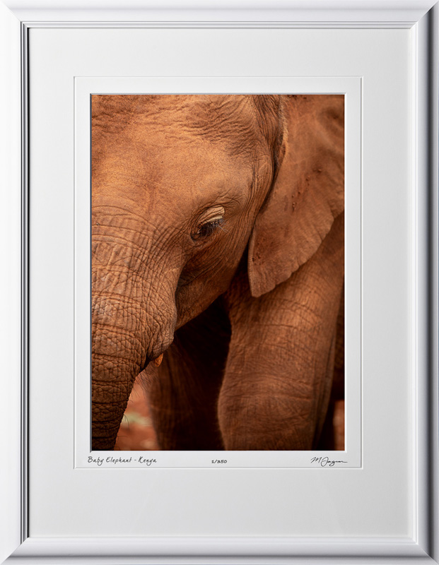 03 W190824A Baby Elephant - Kenya - Fine Art photo of elephant in Africa - 10x14 print in 16x21 frame