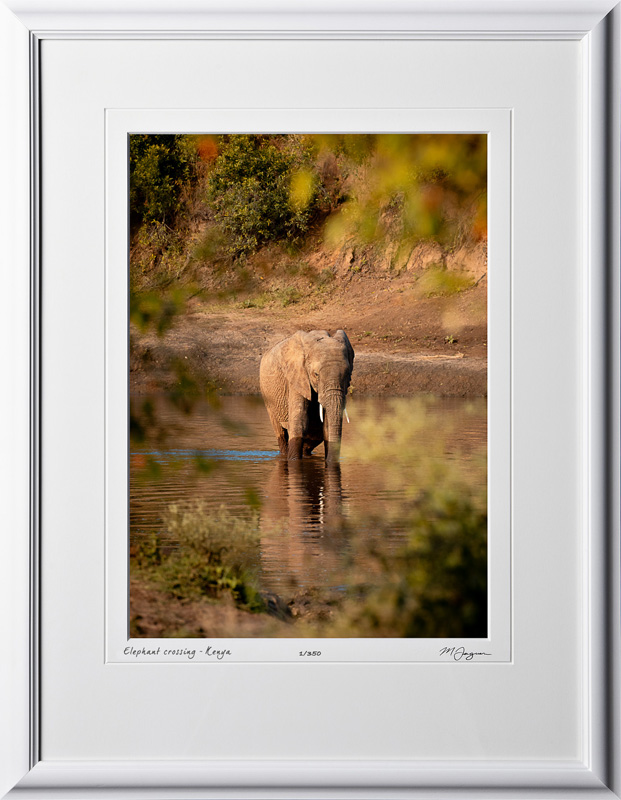 06 W190829B Elephant crossing Kenya - Fine Art photo of elephant in Africa - 10x14 print in 16x21 frame