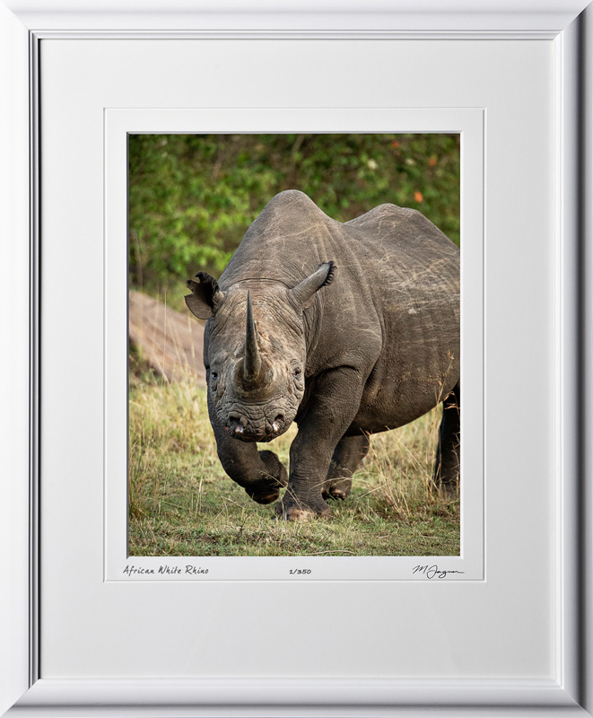 08 W190829C African White Rhino - Africa Fine Art Photo of Rhino - 11x14 print in 17x21 frame