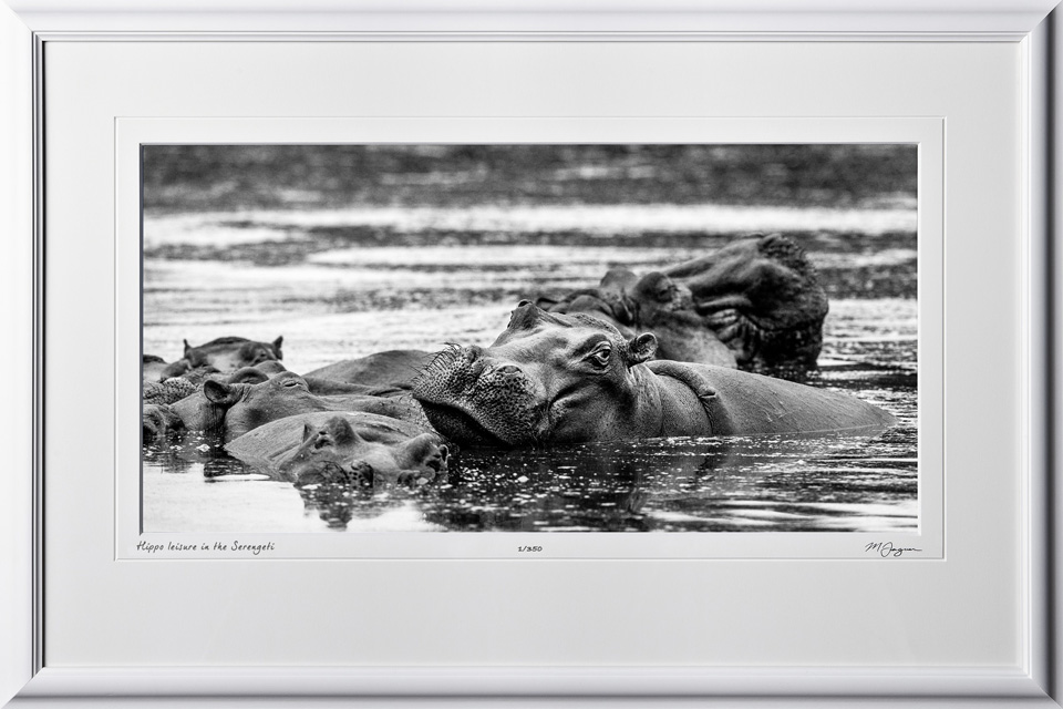09 W190831C Hippo leisure in the Serengeti - Africa Fine Art Photo of Hippos in Africa - 9x16 print in 15x23 frame