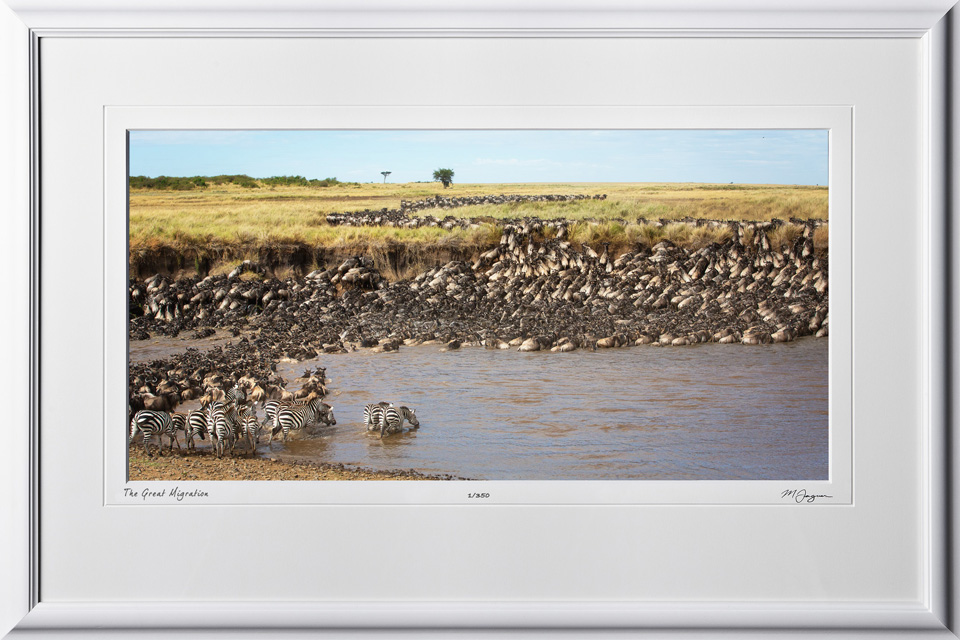 12 W190826D The Great Migration - Serengeti - Africa Fine Art Photo of Wildebeest and Zebra - 9x16 print in 15x23 frame
