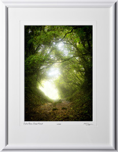 02 S120706 A22 Costa Rica Cloud Forest 10x14 Portrait in 16x21 frame
