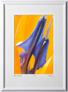 F070316A Bird of Paradise - shown as 12x18