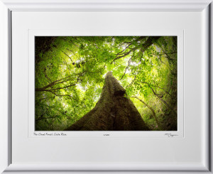 12 S120706 A63 Cloud Forest Costa Rica 12x18 Landscape in 19x24 frame