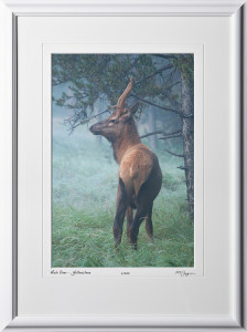 13092001 Mule Deer in Early Morning Fog - Yellowstone - shown as 12x18
