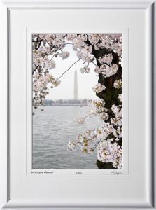 S090402D Washington Memorial - Washington DC Cherry Blossom Festival - shown as 12x18