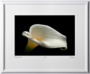 S110516 Calla lily Peru - shown as 12x18