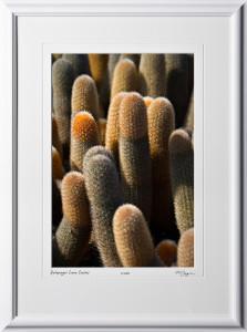 W110509 041 Lava Cactus Galapagos - shown as 12x18