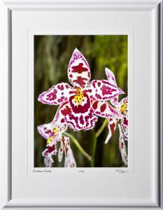 F080404F Oncidium Orchid - Big Island Hawaii - shown as 10x14