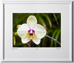 F080404D White Orchid - Hawaii - shown as 10x14