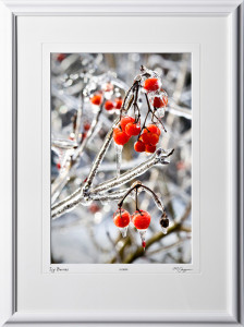 S070117C Icy Berries - shown as 12x18