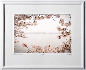 S090402A Jefferson Memorial - Washington DC Cherry Blossom Festival - shown as 15x21