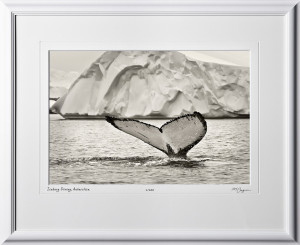 S130112E Iceberg Diving - Antarctica - shown as 12x18