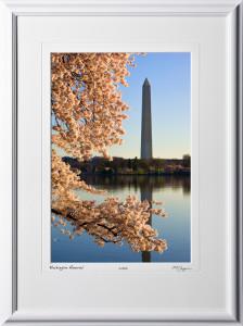 S090403F Washington Memorial - Washington DC Cherry Blossom Festival - shown as 12x18