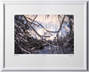 S070117F Icy Twigs - shown as 12x18
