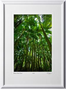 S080404C Hawaii Palm Forest - Big Island Hawaii - shown as 12x18
