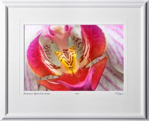 F081113B Phalaenopsis Mystik Isles Orchid - shown as 12x18