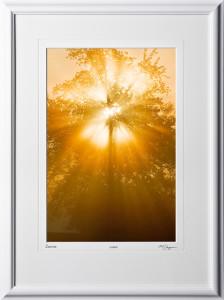 S080923A Sunrise through tree - Michigan - shown as 12x18