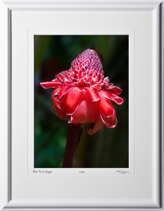 F080404G Red Torch Ginger - Big Island Hawaii - shown as 10x14