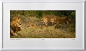 05 W190828D Sisters in charge - Serengeti Africa - Fine Art photo of Lions in Kenya Africa - 10.5x24 print in 17.5x30 frame