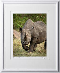 08 W190829C African White Rhino - Africa Fine Art Photo of Rhino - 11x14 print in 17x21 frame