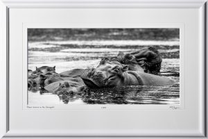 09 W190831C Hippo leasure in the Sarengeti - Africa Fine Art Photo of Hippos in Africa - 9x16 print in 15x23 frame