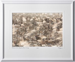 11 W190826A Wildebeest Great Migration River Crossing - Africa Fine Art Photo of Wildebeest in Africa - 12x18 print in 18x25 frame