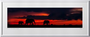 14 W190829D Sunset walk - An elephant family in the Serengeti - Fine Art photo of elephants in Africa - 10x40 print in 16x47 frame